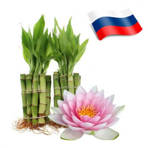 Отдушка лотос и бамбук россия