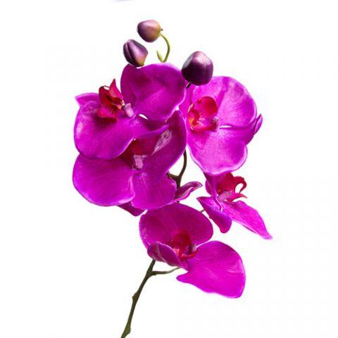 Отдушка орхидея