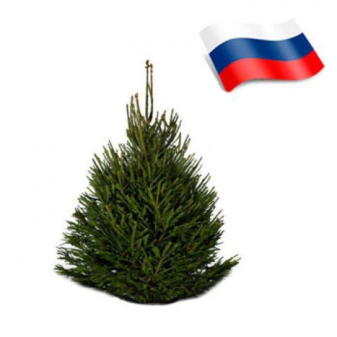Отдушка пихта зеленая россия