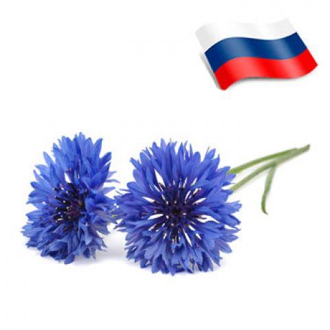 Отдушка василек россия
