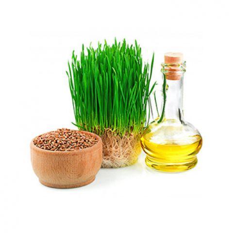 Экстракт масляный Зародышей пшеницы